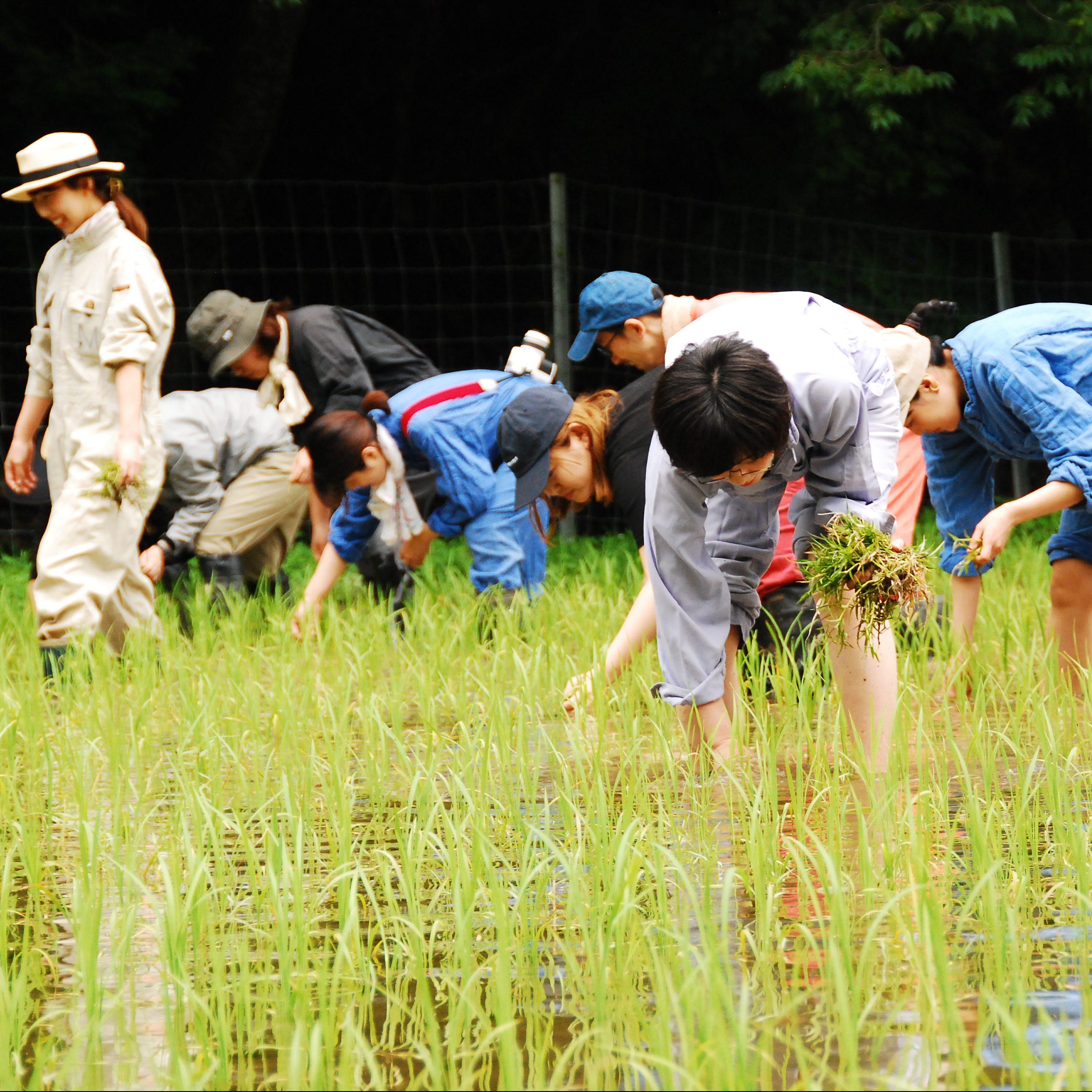 6/19 mumokuteki farm 田んぼ 草とり