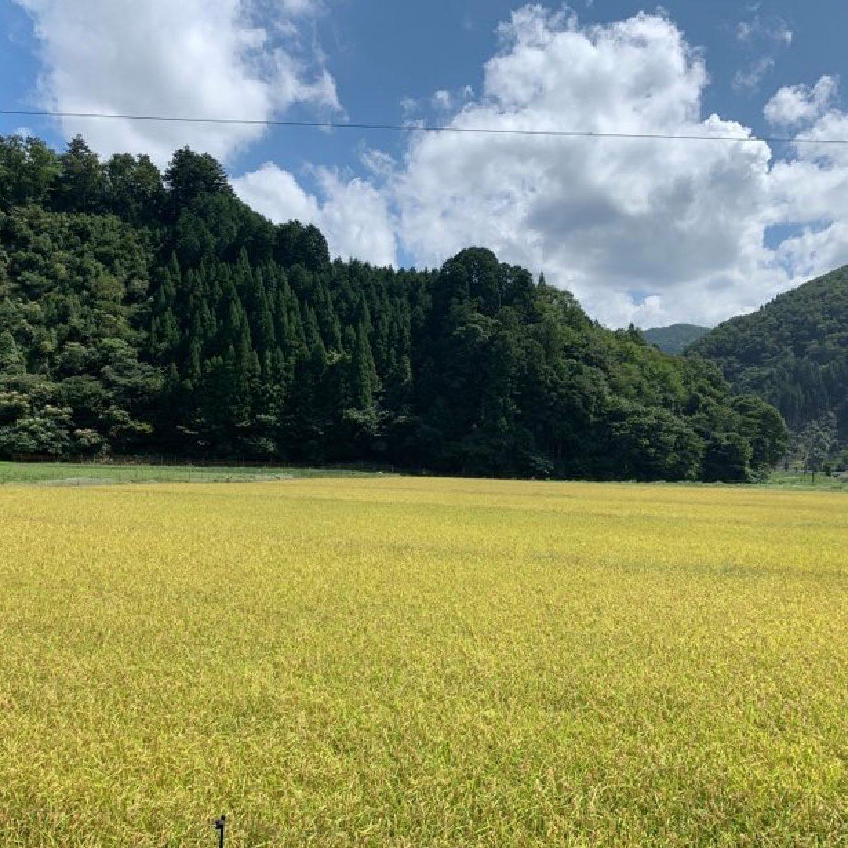 mumokuteki farmでは稲刈りが始まりました!