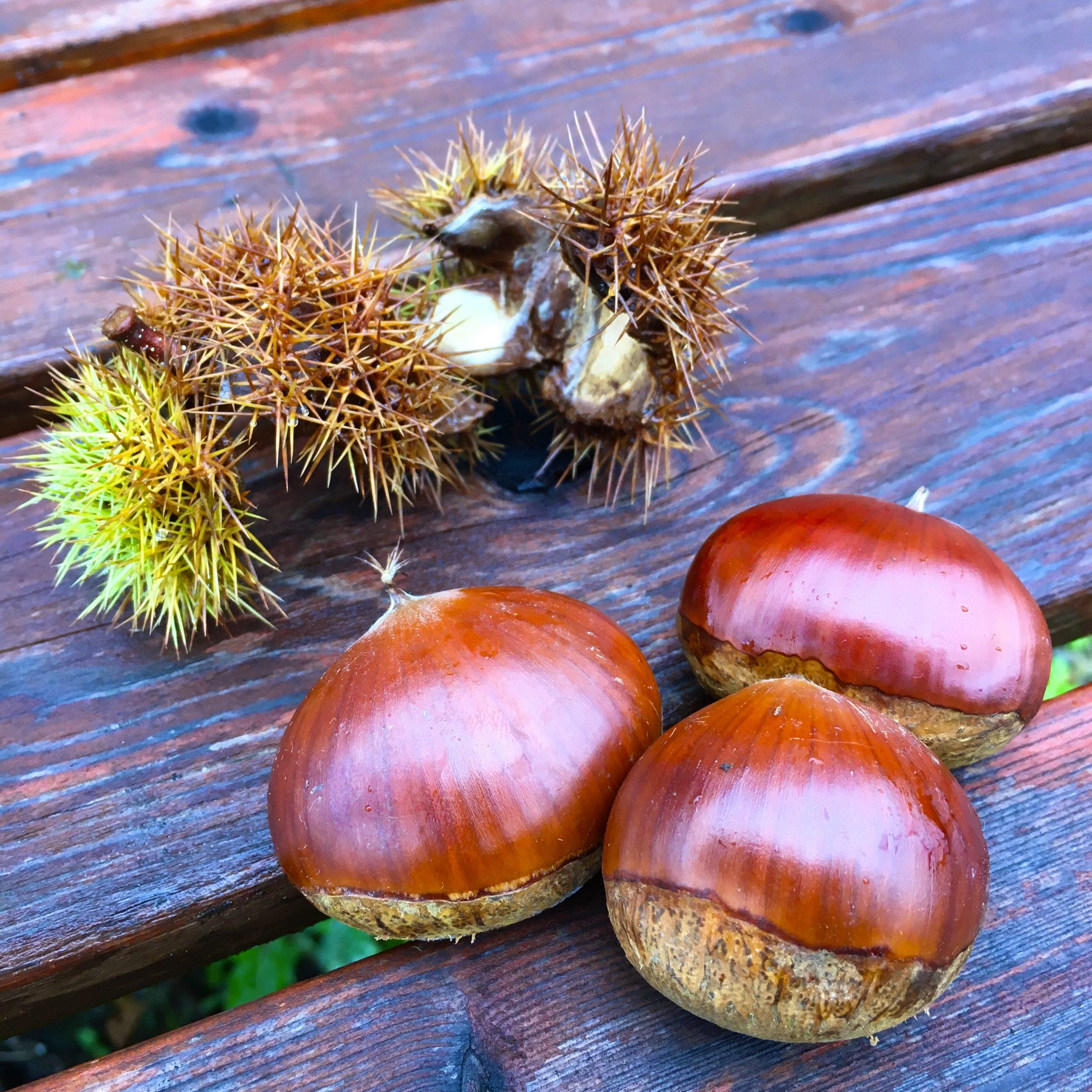 実りの秋 食欲の秋